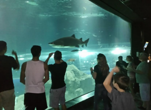 Shark at the aquarium